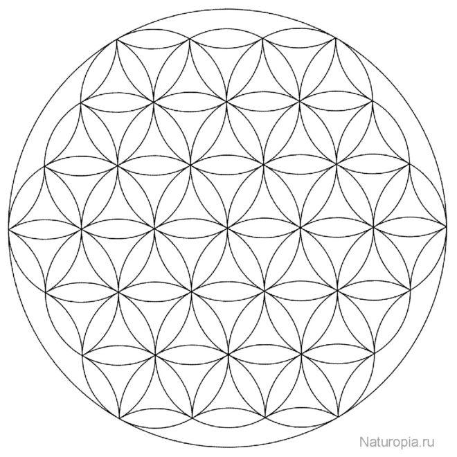 flower-of-life-mandala-raskraska