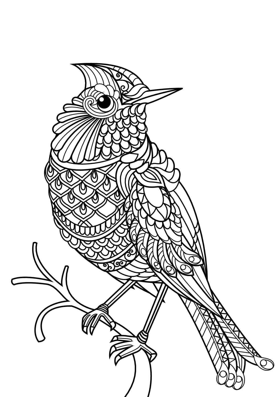 Раскраски птицы для взрослых и детей, распечатать