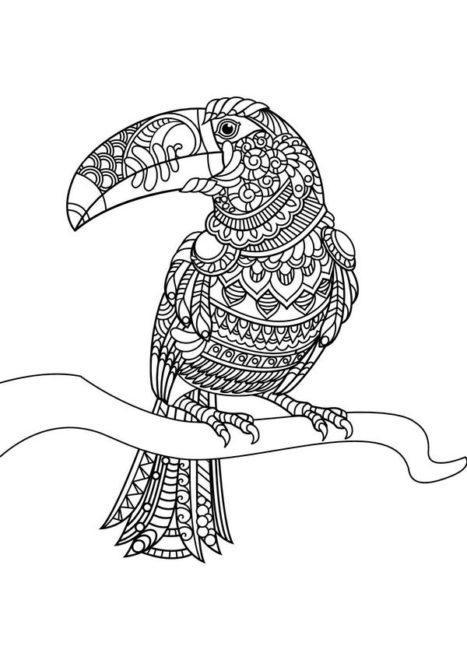 coloring-free-tukan-raskraska-ptici