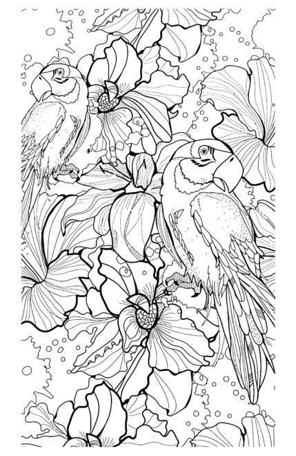 raskraska-ptici-antistress-popugai