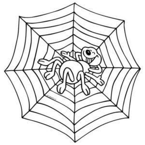 mandaly-zhivotnye-pauk