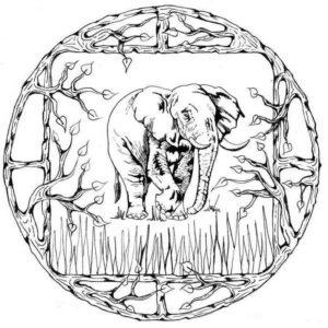 raskraski-mandala-zhivotnie-slon