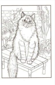 raskraski-koshki-koty-antistress-raspechatat-cat-06
