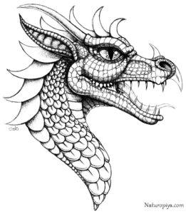 antistress-raskraska-drakon-raspechatat-zentangle-coloring-page-dragon-32