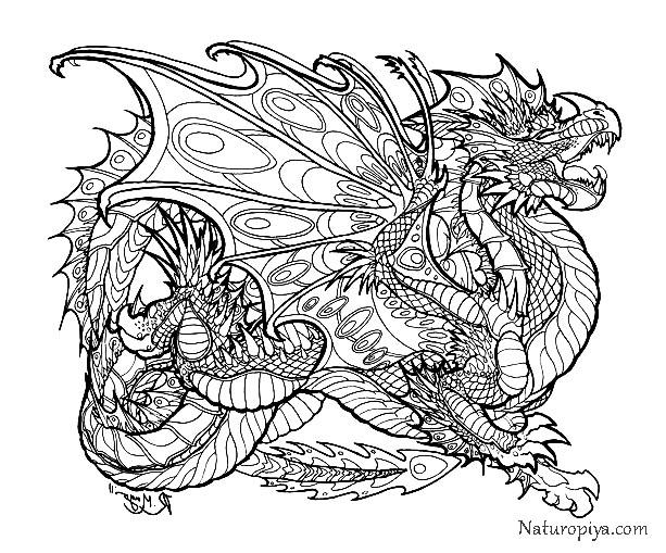 dragon coloring page free printable coloring pages - HD 1846×1531