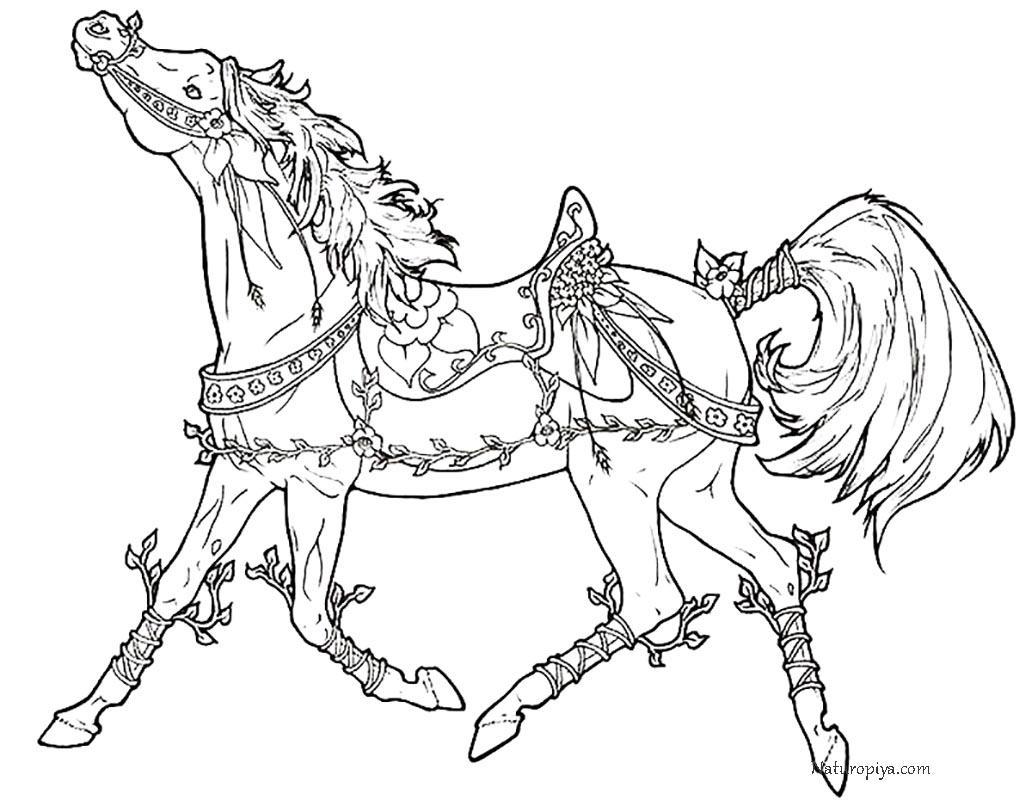 фото раскраска лошади