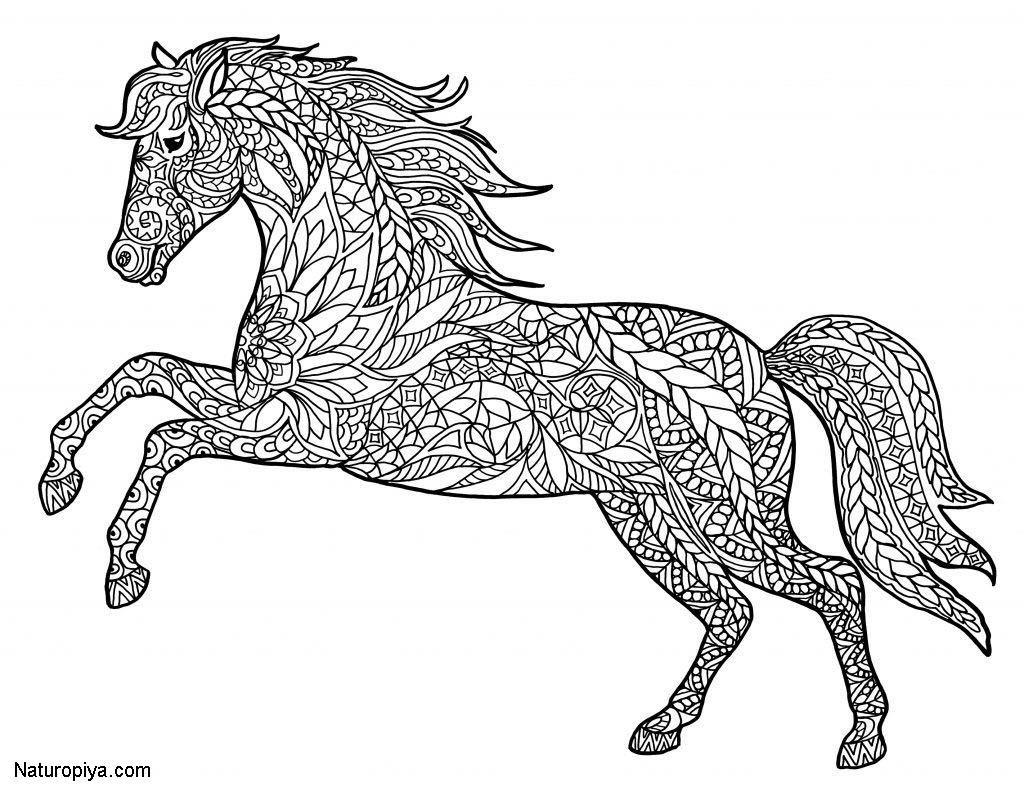 Красивые антистресс раскраски лошадь: распечатать ...