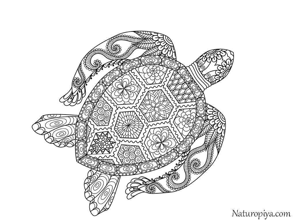 зен арт антистресс раскраски черепаха распечатать бесплатно