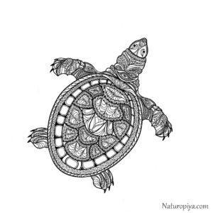 Один из способов поймать дзен - антистресс раскраски Черепаха