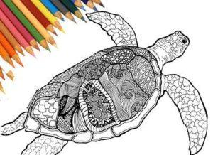 zentangle-turtle-raskraska-antistress-cherepaha-4