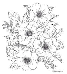 cvety-i-ptichki