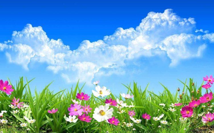 cvety-na-lujayke