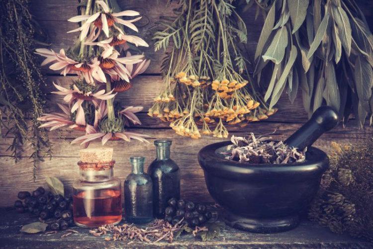 FITOTERAPIA-cveti-lekarstva