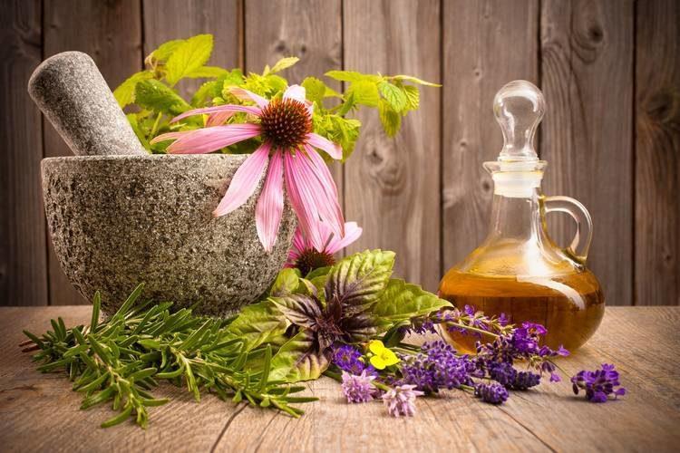 Практическое применение фитотерапии: лечение травами в домашних условиях