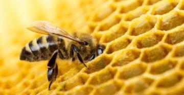 Bee-pchela