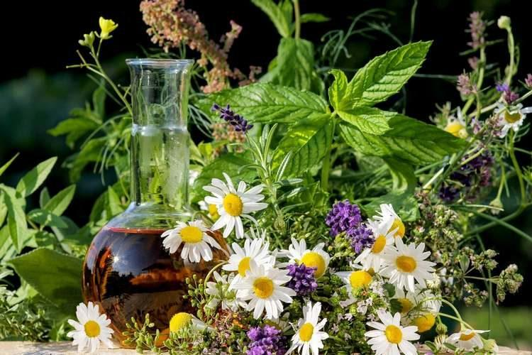 zagotovka-cvetov