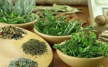 zelenye-lechebnye-travy