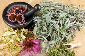 Сбор трав для повышения иммунитета (топ 5 лучших трав и народные иммуностимулирующие рецепты)