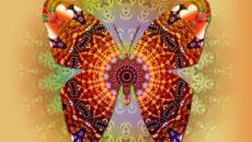 Butterfly-Mandala-babochka
