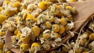 chamomile-cvetki-romashki
