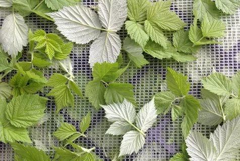 8 полезных свойств чая из листьев малины, рецепты