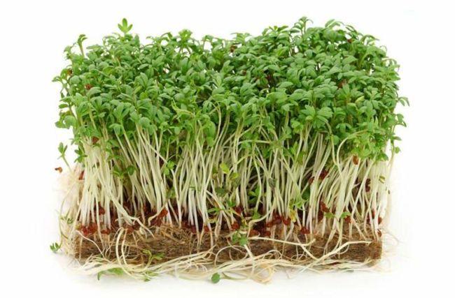 cress-salat-proroshenniy