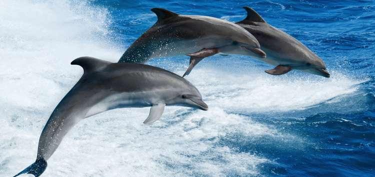 delfines-v-more