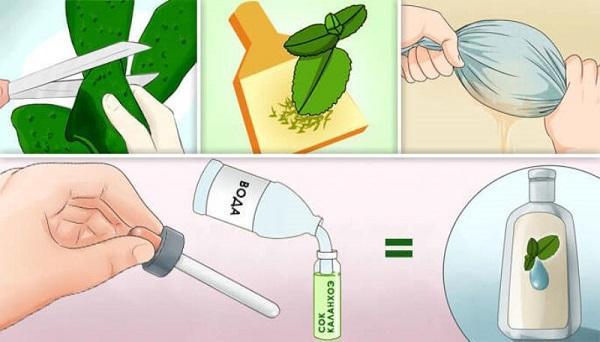 Целебные свойства комнатного растения каланхоэ: описание, результаты, применение в косметологии, отзывы