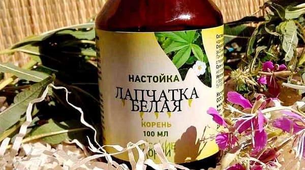 lapchatka-belaya