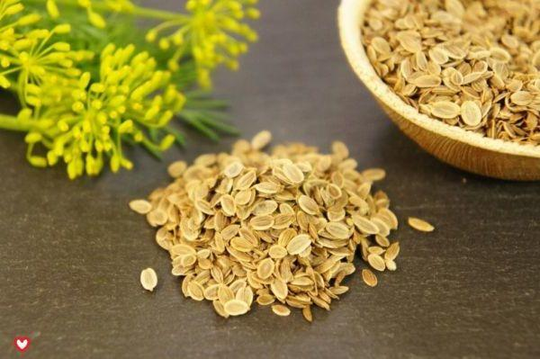 sirie-semena-ukropa
