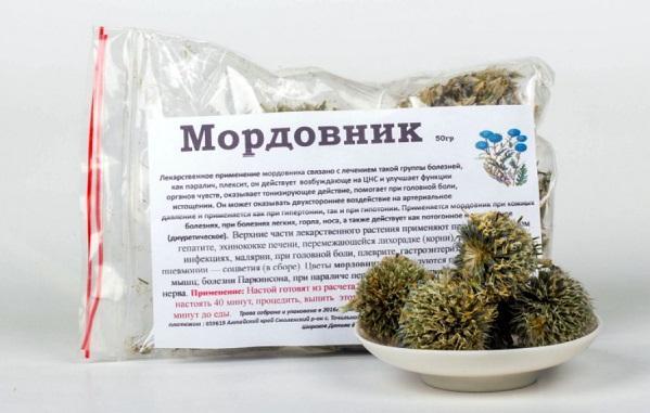 mordovnik-lechebnye-svojstva-i-protivopokazaniya